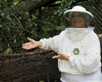 Bronx Honeybee rescue photo by Jessica Katz
